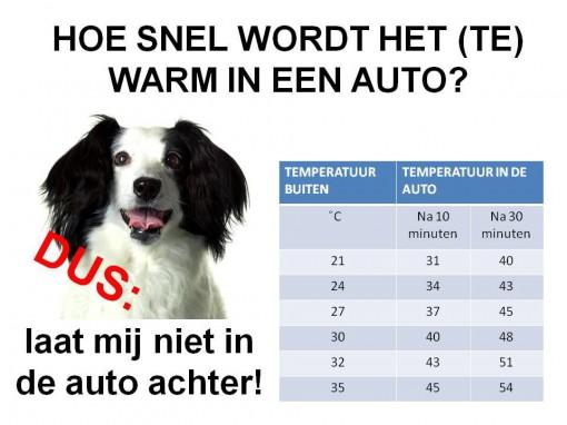 Honden en warm weer