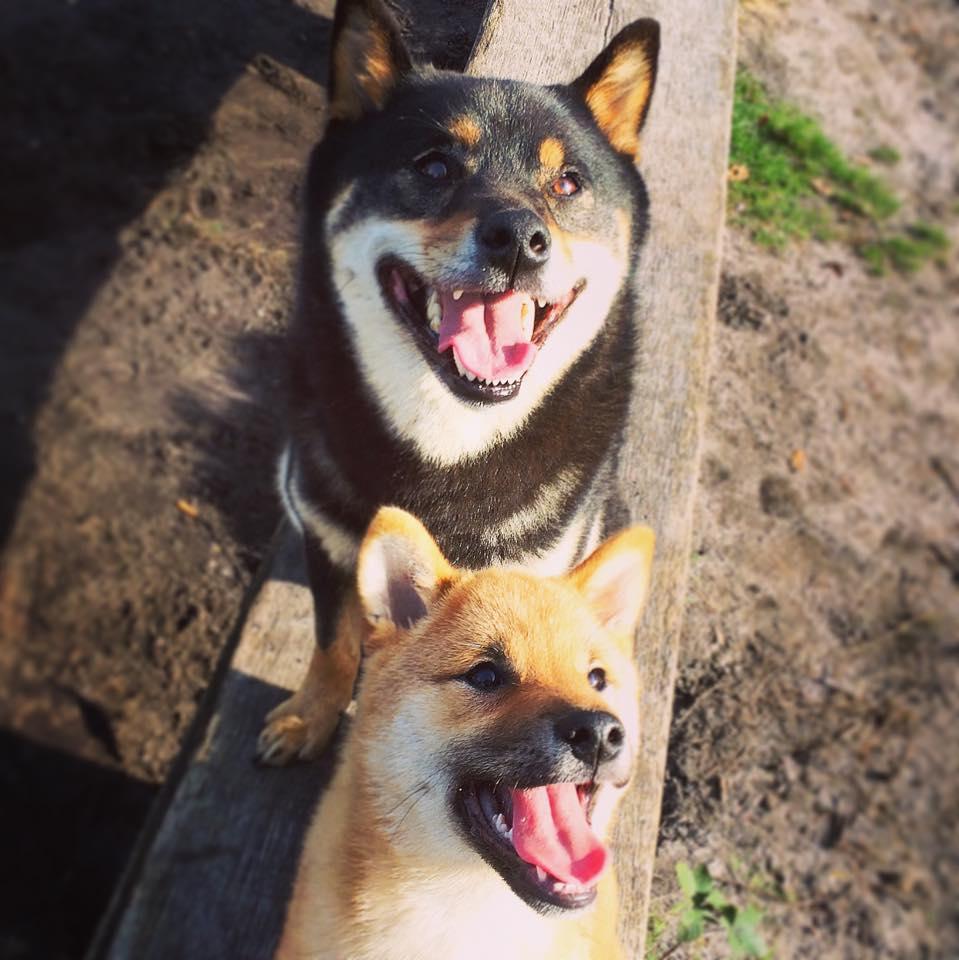 Kalmeringssignalen bij honden