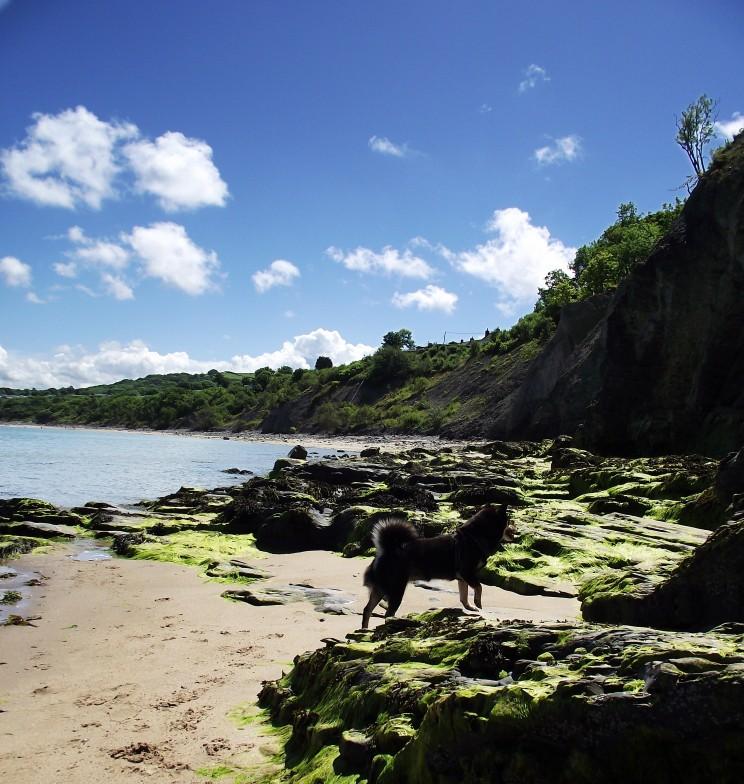 Hond vakantie