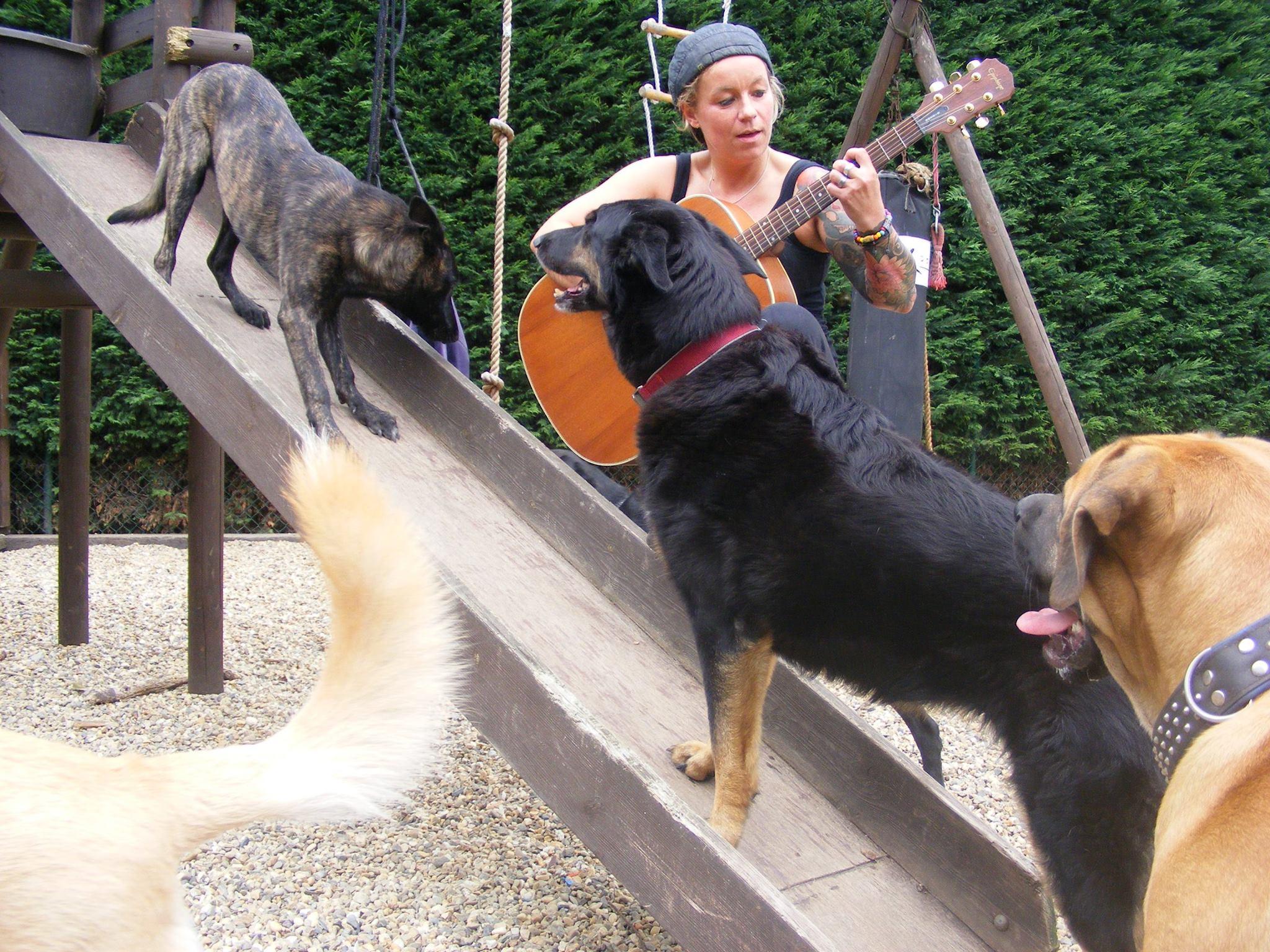 Inu-vriendelijk hondenpension