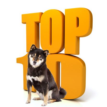 Shibalog Top 10
