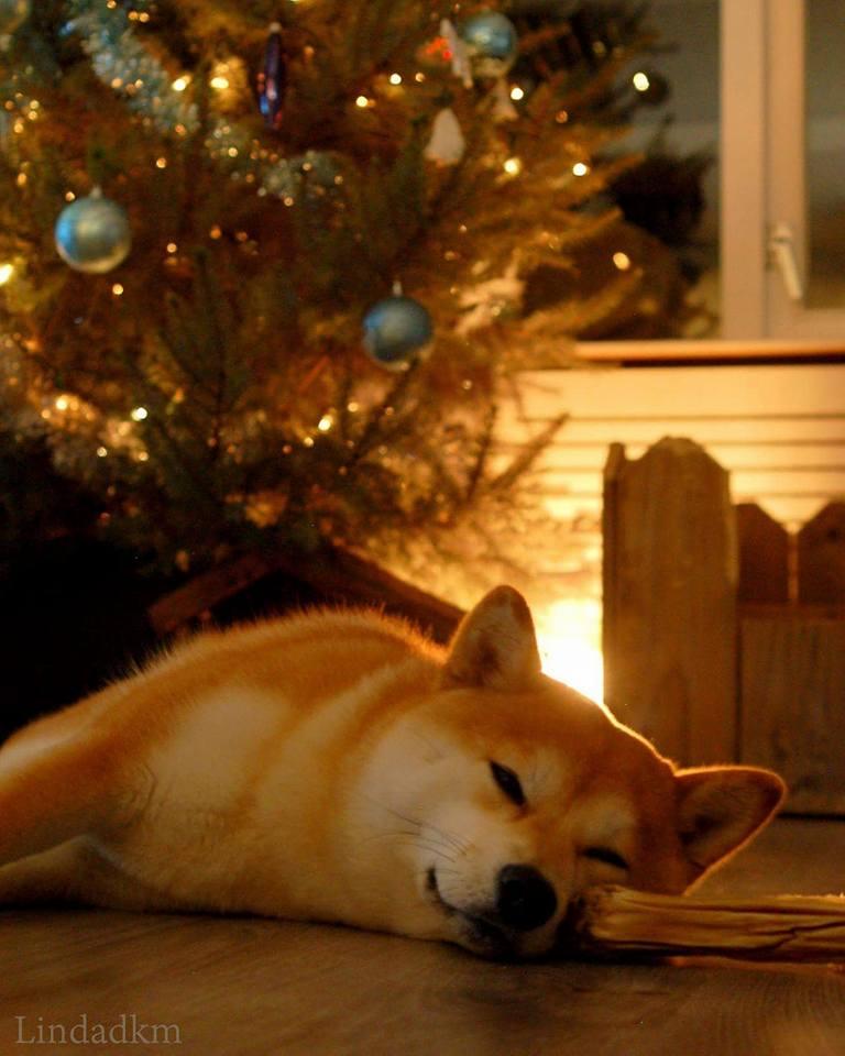 Honden en kerst