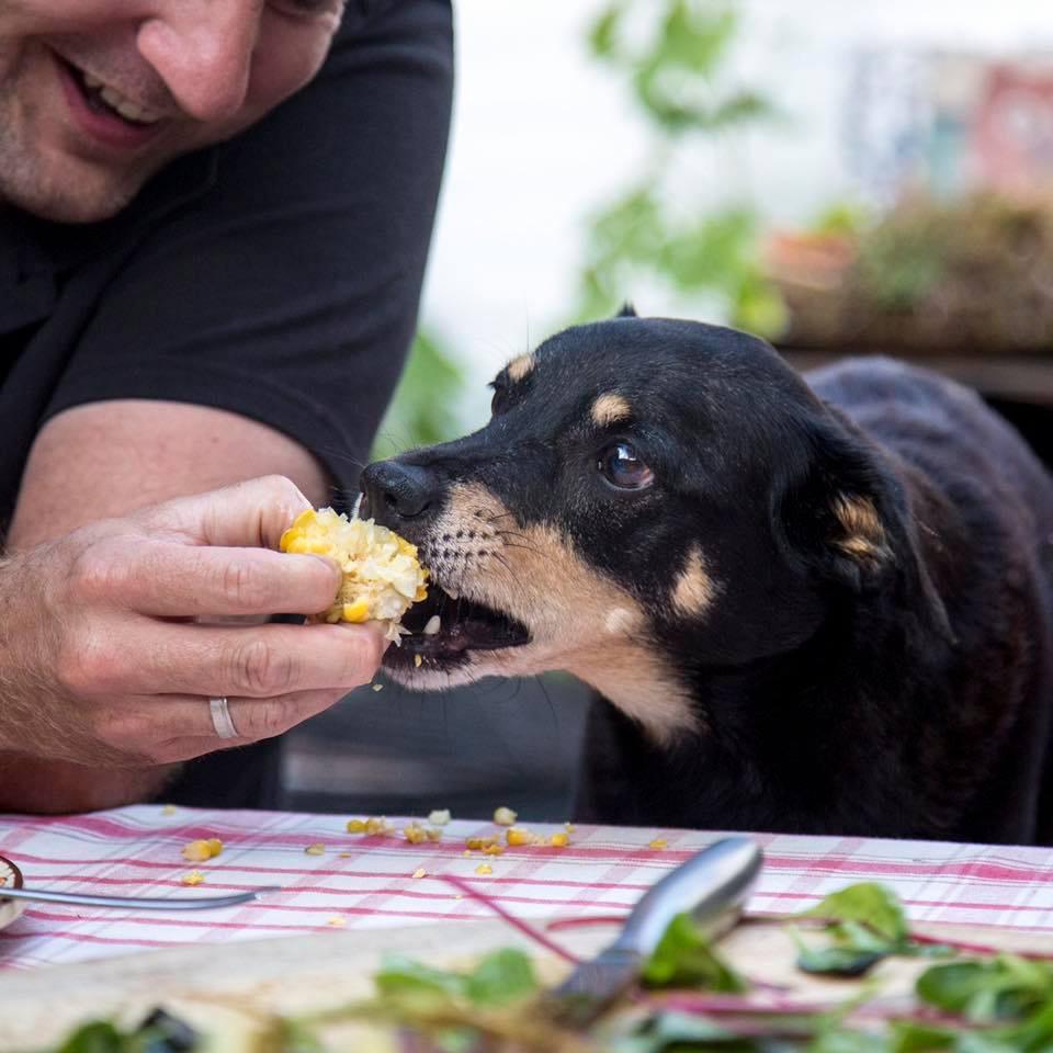 groenten voor honden