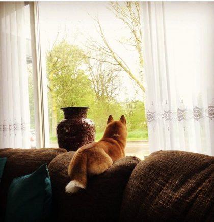 Honden en tijdsbesef